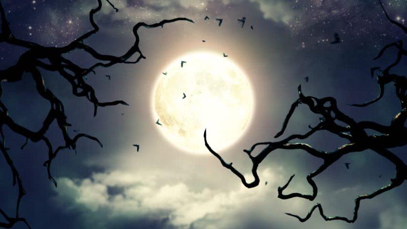 spooky 4